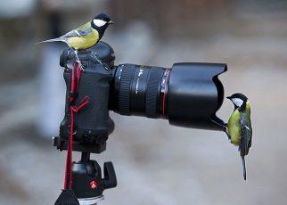 مسابقات بینالمللی عکاسی